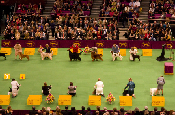 Westminster Kennel Club Dog Show, Madison Square Garden, New York