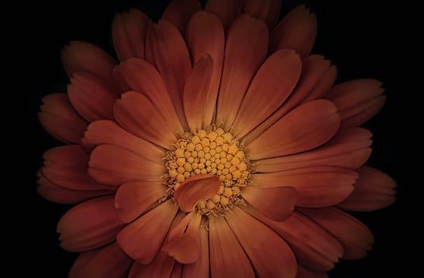San Francisco Ballet Romeo And Juliet, War Memorial Opera House, San Francisco
