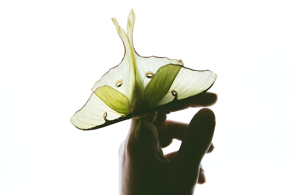 Just one chance to see The Moth