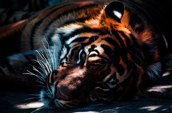 Uncaged The Untold Stories from the Cast of Tiger King, First Interstate Center for the Arts, Spokane